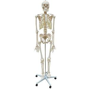 Esqueleto Aproximadamente 170 cm Padrão com Suporte e Base