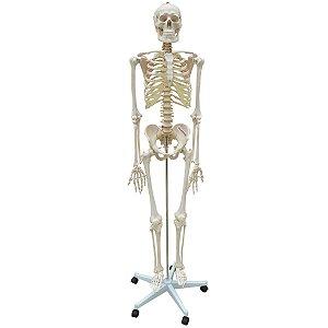 Esqueleto Aproximadamente 168 cm com Coluna Flexível com Suporte e Base com Rodas - TGD-0101-B