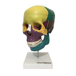 Crânio Didático Colorido em 5 Partes - TGD-0102-A