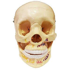Crânio Clássico Com Mandíbula Aberta 2 Partes - TGD-0102-B
