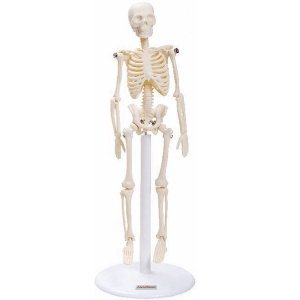 Esqueleto 20 cm - TGD-0103
