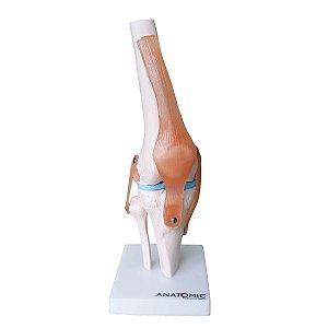 Articulação do Joelho com Ligamentos - TGD-0164-C