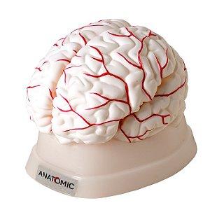 Cérebro com 8 Partes - TGD-0303