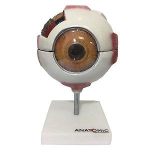 Anatomia do Olho com 8 Partes - TGD-0307