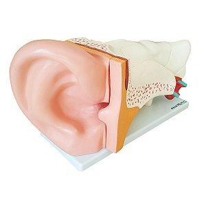 Ouvido Ampliado em 6 Partes - TGD-0309-A