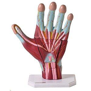 Mão Muscular Ampliada em 3 Partes - TGD-0330-M