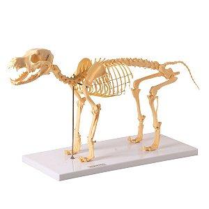 Esqueleto de Cachorro em Resina - TGD-0601