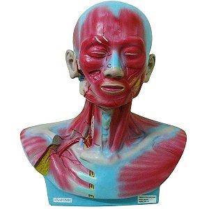 Cabeça e Pescoço Muscular - TGD-4006