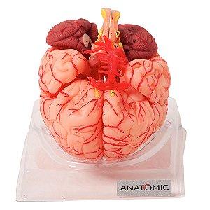 Cérebro com Artérias em 9 Partes - TZJ-0303-A