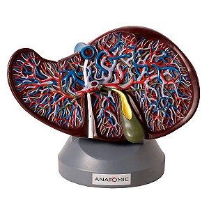 Fígado Luxo - TZJ-0324-B