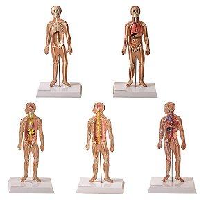 Conjunto de Pranchas para Iniciação ao Estudo Anatômico dos Principais Sistemas do Corpo Humano - TZJ-0328-K