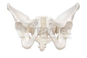 Esqueleto Pélvico Masculino - SD-5004