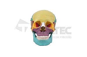 Crânio Colorido com Mandíbula Móvel - SD-5007