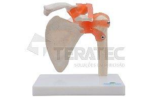 Articulação do Ombro - SD-5016