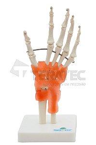 Articulação da Mão - SD-5018