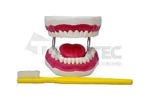 Arcada Dentária Gigante com Língua e Escova - SD-5059