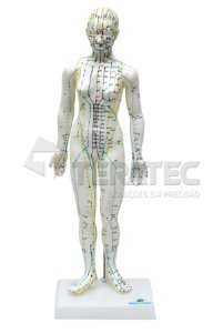 Modelo de Acupuntura Feminino de 50cm - SD-5099