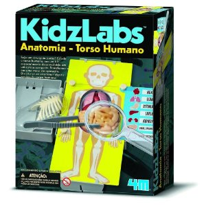 Brinquedo Educativo Anatomia Torso Humano  4m