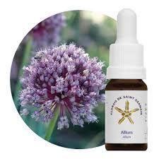 Floral de Saint Germain Allium - Essência Estoque 10mL
