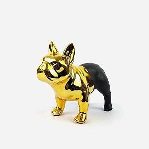 Bulldog Dourado/Preto