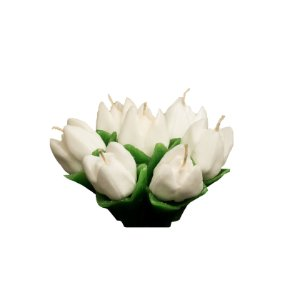 Tulipa Baixa com 7 Botões