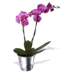 Orquidea Vaso