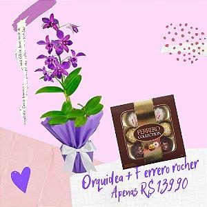 Orquídea Denphal e Ferrero Rocher Collection