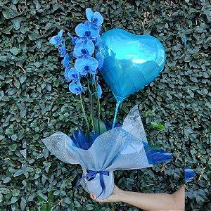 Orquídea Azul e Balão