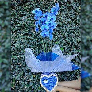 Orquídea Azul e Coração de Bombons