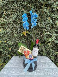 Box de Esplêndida Orquídea Azul