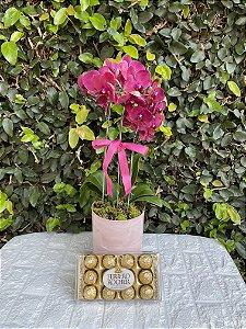 Exuberante Orquídea Pink