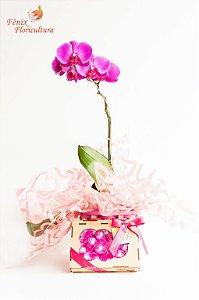 Orquídea Phalaenopsis Pink Presente Com Chocolate