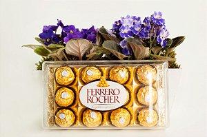 Violetas nobres no cachepô com Ferrero Rocher