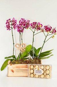 Jardineira de  orquídeas exóticas com Ferrero Rocher