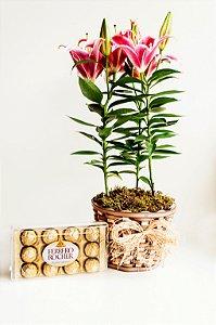 Lirio Rosa Perfumado com Ferrero Rocher