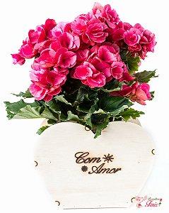 Luxuosa Begônia Rosa para dizer que te amo