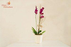 Luxuosa orquídea phalaenopsis exótica com 02 astes