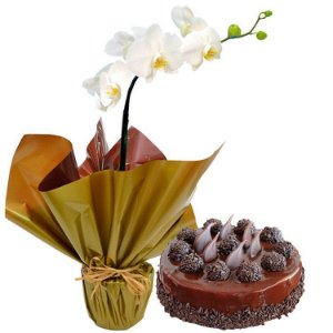 Orquídea Branca e Bolo de Chocolate