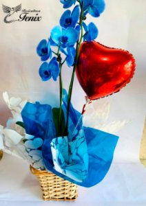 Orquídea Azul Com Balão de Coração