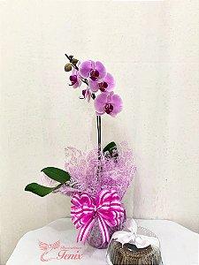 Orquidea Pink Com Bolo de Chocolate
