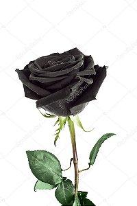 Rosa  black Unitária