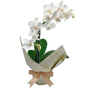 Mini Orquídea Branca