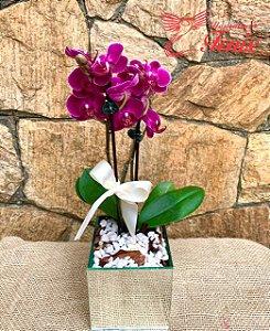 Mini Orquídea Rara Pink No Vaso Espelhado