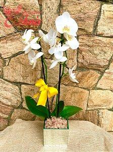 Orquidea Phaleonopolis No Vaso Espelhado