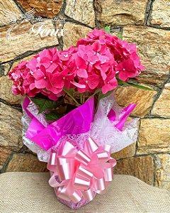 Hortênsia plantada rosa