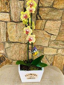 Rara orquídea duas hastes moranguinho