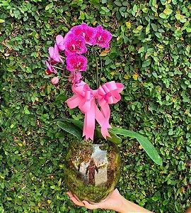 Mini Phaleonopsis No Vaso de Vidro