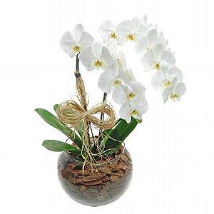 Dupla de Orquídeas Branca No Vaso De Vidro