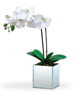 Orquídea Sofisticada