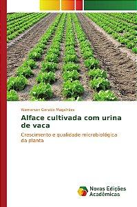 Alface cultivada com urina de vaca